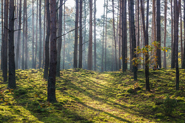 National Park of Kampinos Forest in Masovia region of Poland