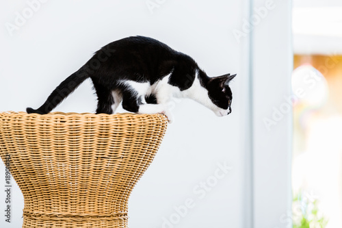 Cat about to jump from wicker stool at home - 189014142
