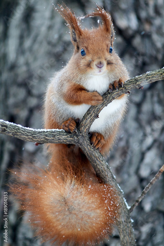 Snow squirrel in the park