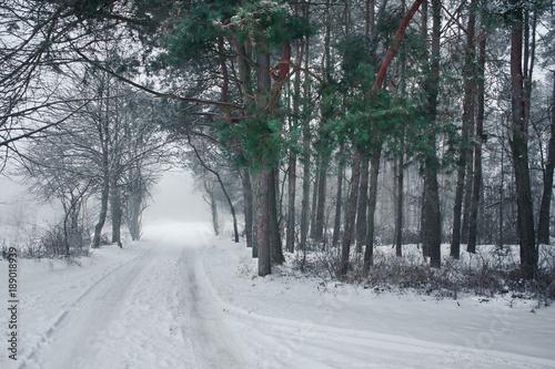Fotobehang Weg in bos Zima w lesie