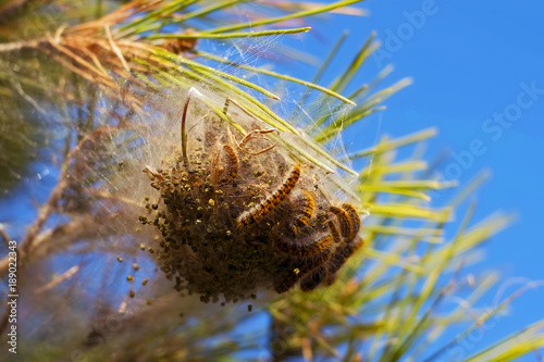 caterpillars and larvae