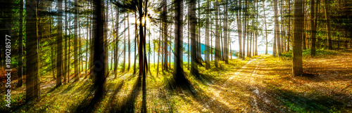 Forest Panorama in Bavaria Germany - 189028577