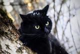 Black cat in snowy woods