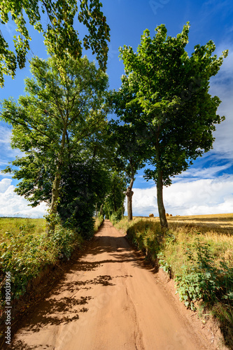 Fotobehang Weg in bos polna droga z drzewami