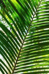 Fundo verde com folha de palmeira.