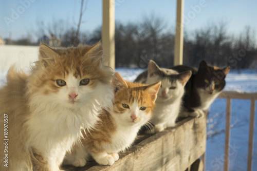 4 kittens peering through the window at home winter outdoors look