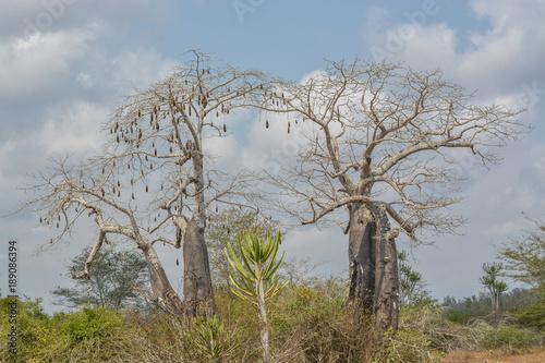 Fotobehang Baobab African savanna landscape with vegetation