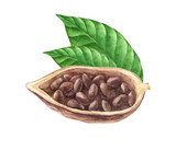 Ripe watercolor cocoa beans - 189149706