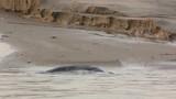 Phoques gris à Berck-sur-mer en Baie d'Authie - 189149760