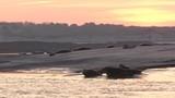 Phoques gris à Berck-sur-mer en Baie d'Authie - 189149930