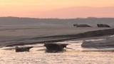 Phoques gris à Berck-sur-mer en Baie d'Authie - 189149978