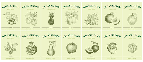 Labels with fruits and berries. Set templates price tags for shops and markets of organic food. Vector illustration art. Vintage. Hand drawn nature objects.
