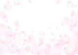花びら ピンク 桜 バラ - 189153574