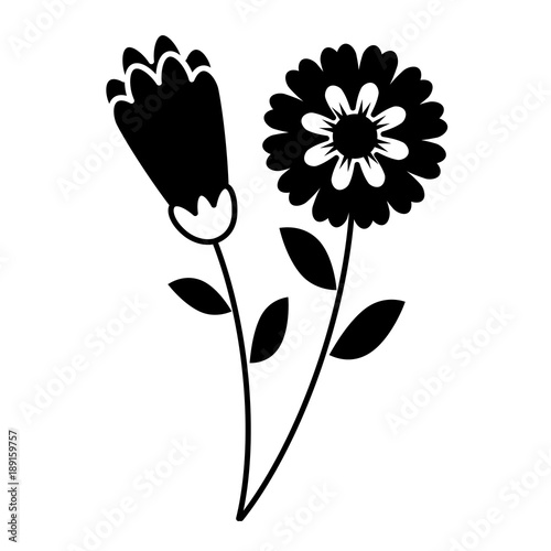 two flowers decorative spring image vector illustration