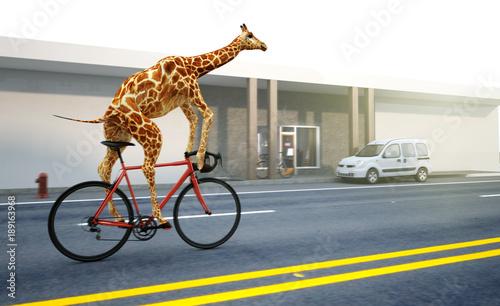 Fototapeta Giraffe fährt Fahrrad