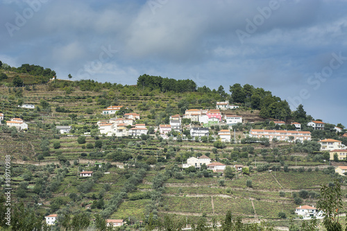 Fotobehang Khaki Slopes covered with vineyards in Portugal