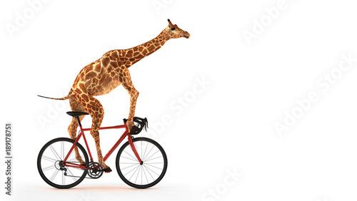 Fototapeta Freigestellte Giraffe auf Fahrrad