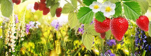 garden strawberry and raspberry - 189199502