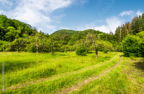 Foto op Canvas Pistache abandoned apple orchard on a grassy field. lovely mountainous landscape in summertime