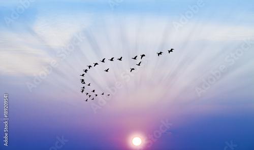 Papiers peints Morning Glory pajaros cruzando el amanecer azul