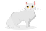 Isolated white cat.