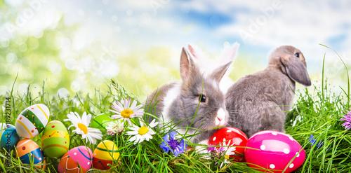 Fotobehang Natuur Banner Ostern Eier Hase