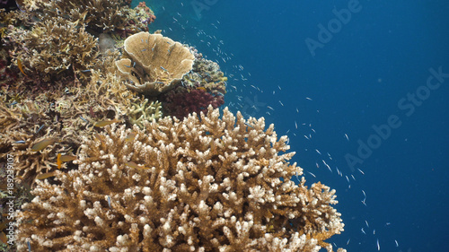 Fish and coral reef. Tropical fish on a coral reef. Wonderful and beautiful underwater world with corals and tropical fish. Hard and soft corals. Diving and snorkeling in the tropical sea. Travel