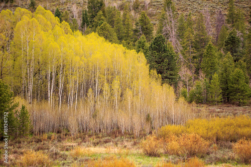 Fototapeta Spring landscape in the Wasatch Mountains, Utah, USA.