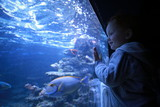 Boy looking at fish in aquarium - 189248597