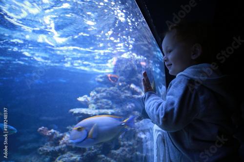 Boy looking at fish in aquarium