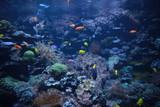 Colorful fishes in the aquarium - 189250543