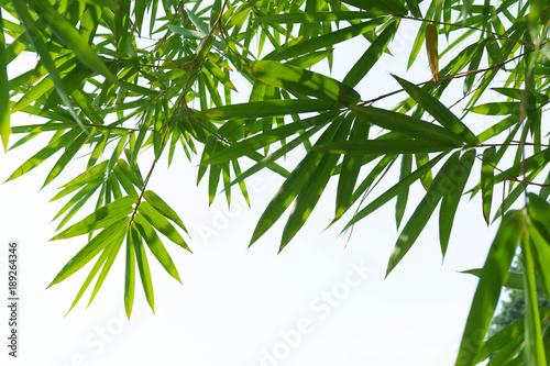 Fotobehang Bamboe green bamboo leaves isolated on white