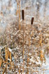 dry winter plants
