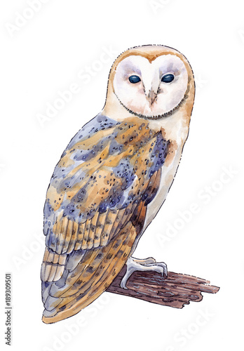 Plexiglas Uilen cartoon Watercolor hand drawn picture of the barn owl on the white background