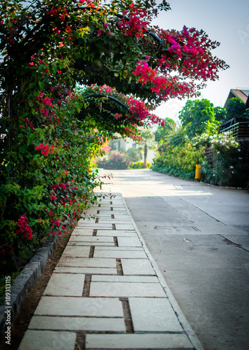 A footpath and plants with flowers