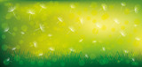 Dandelion seeds on a green background.