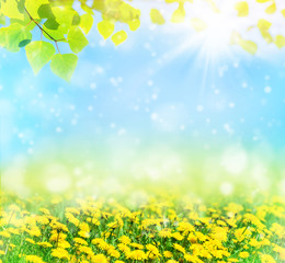 Beautiful spring pattern for design with blooming dandelions and birch leaves. Natural background.