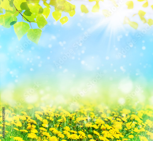 Beautiful spring pattern for design with blooming dandelions and birch leaves. Natural background. - 189328160