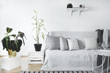 The scandinavian stylish livingroom with plants, modern sofa and projector on empty white wall background.