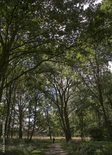 Fotobehang Weg in bos Chemin dans le camp de concentration de Neuengamme, Hambourg, Allemagne