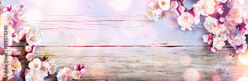 Spring Banner - Pink Blossoms On Wooden Plank - 189375340