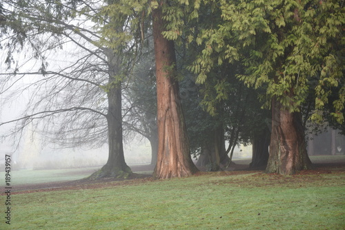 Tuinposter Olijf trees