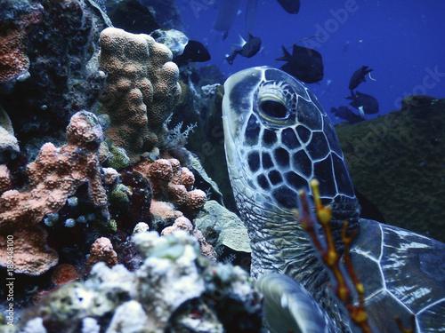 Aluminium Schildpad Tortuga marina