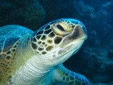 Meeresschildkröte - 189480155