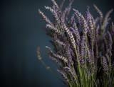 Retro Lavendel