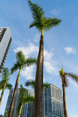 Vista di Downtown Miami