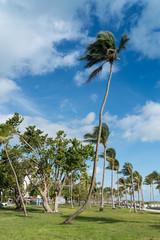 Palme in Miami Beach, Florida, USA