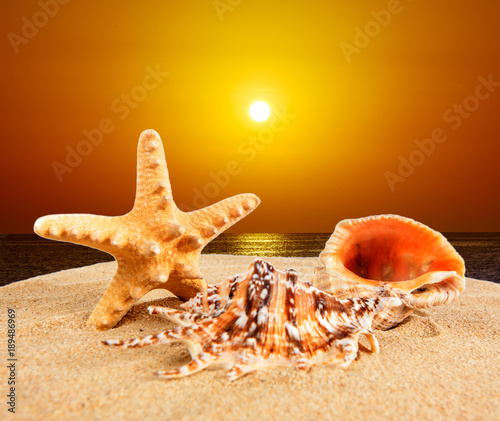 Fotobehang Strand sea shell on sandy beach at sunset