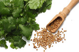 coriander leaves and seeds isolated on white background top view - 189523328