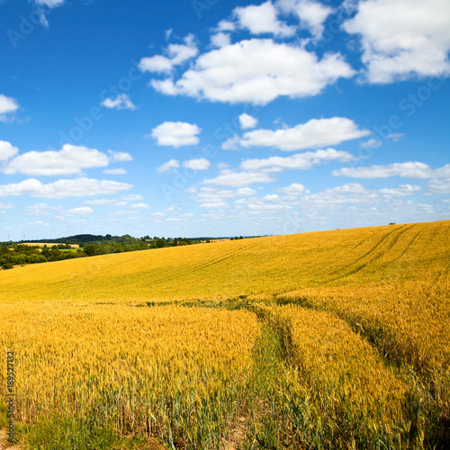 Foto op Canvas Meloen France > Agriculture > Campagne